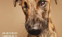 Lucha Contra el Maltrato Animal